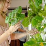 The Hydroponic Gardening Best Environment for Your House